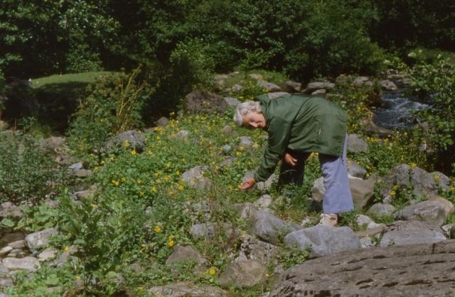 Botanising