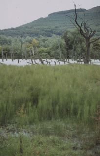 Pond in 1986