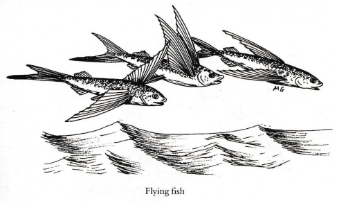 flying_fish_cropped