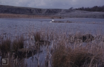 Cosmeston, North of West lake before path made. March 1978