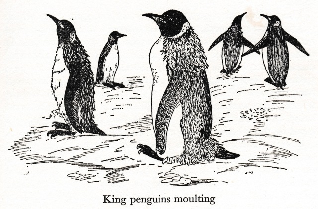 kingpenguins