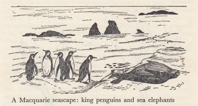 seacape