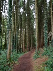 Coed y Bedw Woodland